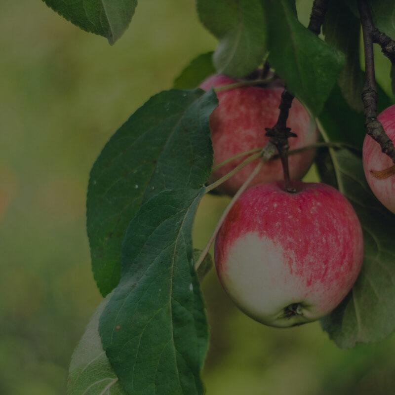School Orchard