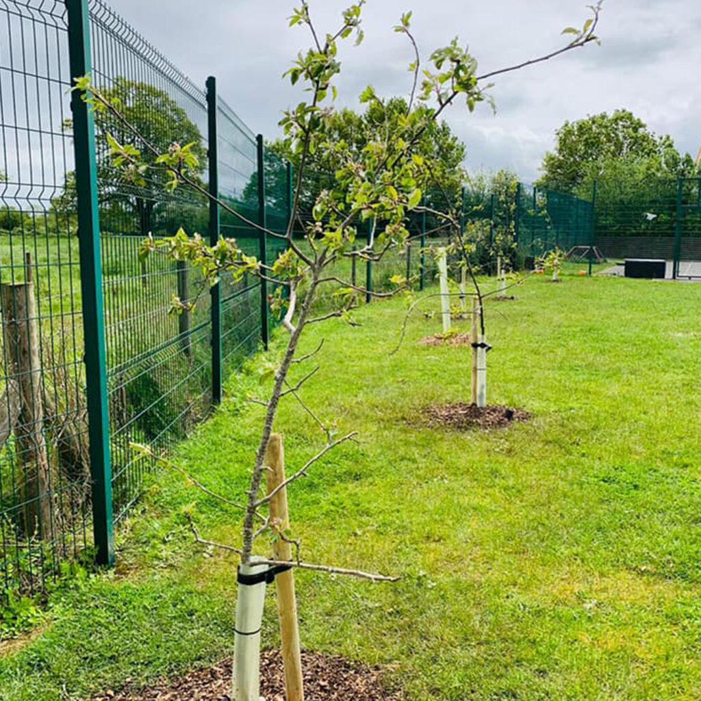 Primary School Orchard